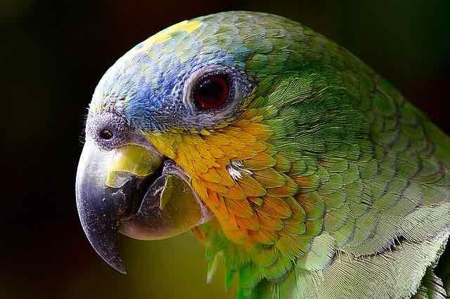 鳥の目とは