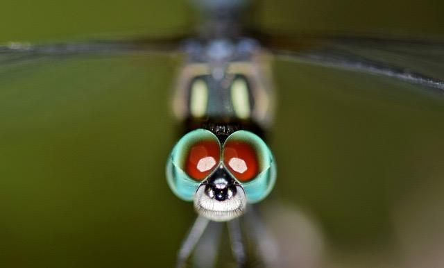 虫の目とは