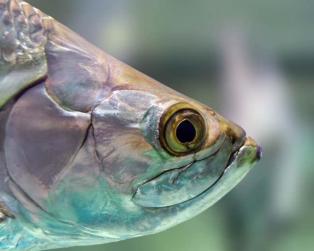 魚の目とは